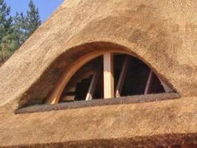 Trzcina dachowa Dach-Reed
